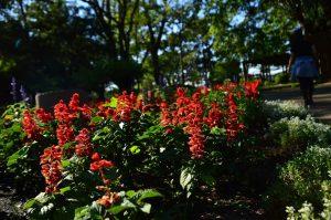 Parque cheio de flores para todos os lados