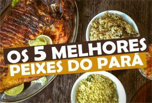 Os 5 Melhores Peixes do Pará - pratos imperdíveis do Pará